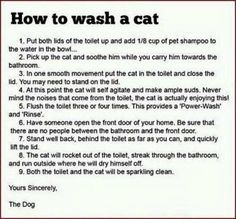 A dog's instructions on how to clean the cat