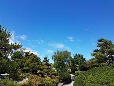 🤣🤣where the green fern grows Lorem Ipsum, Golf Courses, Clouds, Sky, Fern, Men's Style, Plants, Bunny, Instagram