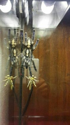 Poecilotheria Metallica, Candle Sconces, Wall Lights, Candles, Home Decor, Collection, Homemade Home Decor, Appliques, Candle Wall Sconces