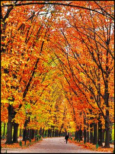 Fall colors in Bucharest, Romania