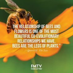 """""""The relationship of bees and flowers is one of the most beautiful co-evolutionary relationships we have. Bees are the legs of plants."""" - Queen Of The Sun  Watch it now on www.FMTV.com"""