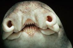 strange looking animal