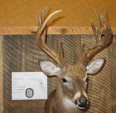 79 Best Big Deer Images Big Deer Deer Deer Hunting