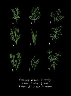 Herbs... How cute would this be framed and hanging in my kitchen?