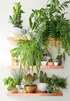 Indoor plants decoration makes your living space more comfortable, breathable, and luxurious. See these 99 ideas on how to display houseplants for inspiration.