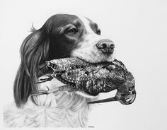A Soft Mouth by William Harrison Wolff Carbon Pencil ~ x Hunting Art, Hunting Dogs, Grouse Hunting, Hunting Painting, Pheasant Hunting, Sketch Tattoo Design, Spaniel Dog, Springer Spaniel, Dog Artwork
