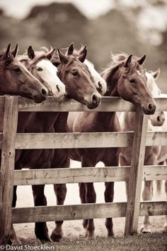 If you have unique photos of your horses, why not turn them into very special art for your home. They are the truest expression of your equestrian style.