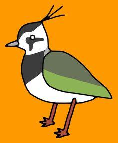 Northern lapwing / #Animal #Bird #タゲリ