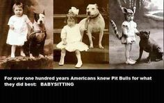 ... on Pinterest | Pitt Bulls, Cute Pitbull Puppies and Dog Pictures