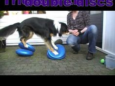 101 tricks with balance discs for dogs to improve body awareness - YouTube - great to use for agility dogs