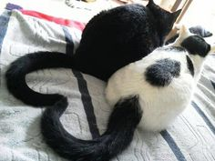Two Cats Sharing One Heart