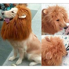 Pet Dog Cat Lion Wigs Mane Hair Festival Party Fancy Clothes Costume with Ears - http://www.thepuppy.org/pet-dog-cat-lion-wigs-mane-hair-festival-party-fancy-clothes-costume-with-ears/