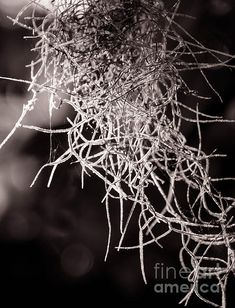 Nature Abstract Black And White by Andrea Anderegg