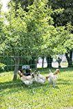 Filet volailles non Electrifiable 112 cm 25 m, double pointe La Gale, Les Parasites, Kallax, Pet Health, Permaculture, Dolores Park, Animals, Simple, Garden