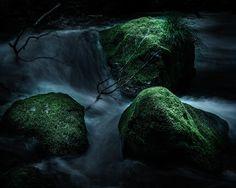 Moss - 苔 by Takao Tsushima