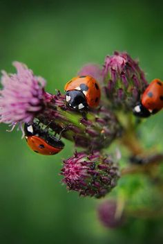 Times A Ladybird by Yhun Suarez Lady Bug, San Antonio, Spring Birds, Flower Company, All Gods Creatures, Love Bugs, Blue Bird, Beautiful Creatures, Lady In Red