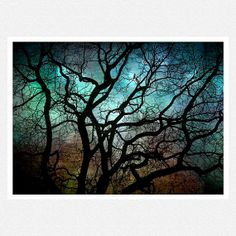 Nature Photography teal black tree by moonlightphotography on Etsy,
