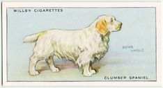 Dogs Clumber Spaniel, Dog Artwork, Collector Cards, New York Public Library, Book Of Shadows, Digital, Postcards, Dogs, Animals