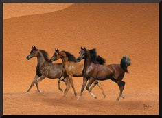 my art I love arabian horses