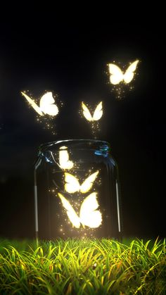 ↑↑TAP AND GET THE FREE APP! Shining Jar with Butterflies Black Glass Night Light Sparkle Grass Mystic Magic Fantasy Amazing For Girls HD iPhone 6 plus Wallpaper