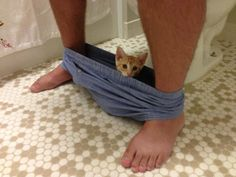 Cats really don't believe in privacy.