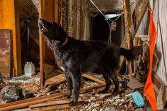 Hard-Working Dogs Honored by Photographer, Andrew Fladeboe � Play Safe Pet Stairs