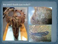 "Royal Tyrrell Museum Speaker Series 2012 Rhian Russell, Royal Tyrrell Museum ""Palaeoconservation: An emerging field"" Originally published April Moose Art, Fossils"