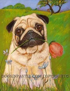 """Pug's gift...Moe's Rose by Mary Detwiler Oil Pastel ~ 12"""" x 9"""""""