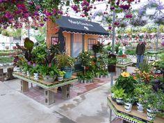 K Drive Greenhouses, MI