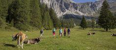 Wandern in den Tiroler Bergen - Wandertipps