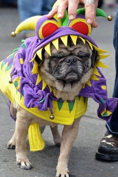 Another reason to love Mardi Gras! Krewe of Barkus Mardi Gras Parade 2012