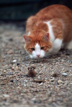 The Hunter & the Hunted...this is what my cats are doing now, except...the mouse is in our bedroom :(