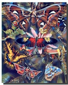 Your home is the place where you express your moods and taste. If you feel empty and lonely by viewing your dull walls and want to refill you're surrounding with passion and energy this beautiful butterflies insects collage animal nature art print poster. You'll definitely enjoy viewing this poster into your wall. So what are you waiting for, hurry up and order this poster for its excellent quality with high degree of color accuracy.