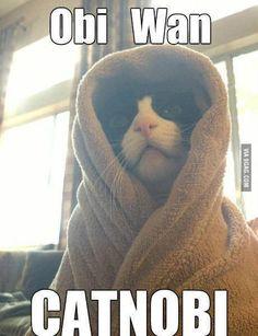 Obi Wan Catnobi - Star Wars Cat