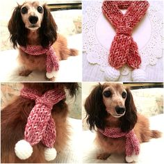 Crochet Dog Scarf Dog Bandana Dog Cowl Cat by KichijojiKawaii