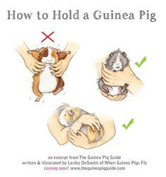 guinea pig illustration - Buscar con Google
