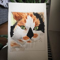 #catlove #caturday365 #watercolor #watercolorillustration #watercolorcat #greeneyes #tricolorcat #illustration #illustratenow #illustrationoftheday #drawingoftheday #drawing #draw #colorslovers