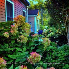 A Hydrangea garden in NY. Landscape, garden design and construction services in the NJ and NY areas. 845-590-7306 Summerset Gardens Elegant Landscape Design, Fine Workmanship http://summersetgardens.com