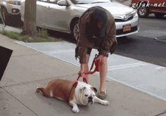 Just how i imagine it :) Stubborn bulldog <3