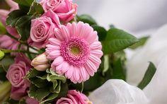 Herunterladen hintergrundbild gerbera, rosen, blumenstrauß, rosa blumen close-up