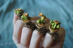 Adjustable ring cactus in a pot - Orange flower cactus. Ready to ship!! By Sifaka