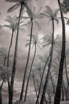 South Seas by David Manzi