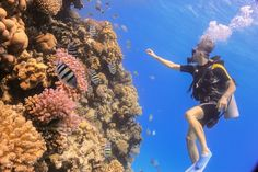 Scuba diving in Red Sea Egypt
