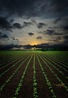 Sunset Crop #photos, #bestofpinterest, #greatshots, https://facebook.com/apps/application.php?id=106186096099420