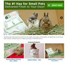Small Pet Select sells premium timothy hay for rabbits, guinea pigs, and chinchillas. We deliver the #1 all natural, high nutrition, small pet food your rabbit, guinea pig, or chinchilla will love. http://smallpetselect.com/