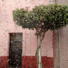 que las gotas son esas lagrimas que nos guardamos  #lluvia #miamorteextrañe #slp #tardelluviosa