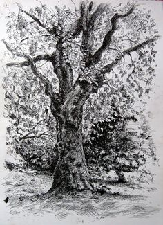 how to draw trees with ink and ink wash on canvas - Google Search
