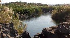 نتيجة بحث الصور عن Reserves Red Sea Governorate