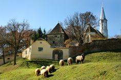 Biserica fortificată de la Alţâna - Site-ul oficial al județului Sibiu Sibiu Romania, Places, Passport, Beautiful Things, Sweet, Green, Lugares