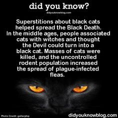 """did-you-kno: """" Superstitions about black cats helped spread the Black Death. In the middle ages, people associated cats with witches and thought the Devil could turn into a black cat. Masses of cats. Animal Facts, Cat Facts, Weird Facts, Random Facts, Black Cat Superstition, Cute Funny Animals, Funny Cats, Black Cat Appreciation Day, Super Cat"""